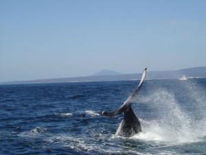 Merimbula whale watching